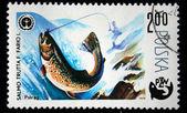 Polonia - circa 1979: un sello impreso en Polonia muestra peces trucha marrón - salmo trutta morpha fario, circa 1979 — Foto de Stock