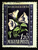 HUNGARY - CIRCA 1951: A stamp printed in Hungary shows Campanula - Bellflower, circa 1951 — Stock Photo