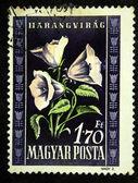 HUNGARY - CIRCA 1951: A stamp printed in Hungary shows Campanula - Bellflower, circa 1951 — Stock Photo