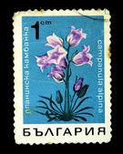 BULGARIA - CIRCA 1970s: A stamp printed in Bulgaria shows campanula alpina, circa 1970s — Stock Photo