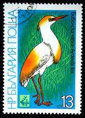 BULGARIA - CIRCA 1981: A stamp printed in Bulgaria shows bird Cattle Egret - Ardeola ibis, circa 1981 — Stock Photo