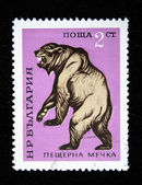 BULGARIA - CIRCA 1980s: A stamp printed in Bulgaria shows Cave Bear - Ursus spelaeus, circa 1980s — Stock Photo