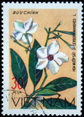 VIETNAM - CIRCA 1978: A stamp printed in Vietnam shows Sea Mango) - Cerbera manghas, series, circa 1978 — Stock Photo