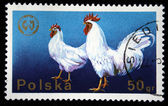 POLAND - CIRCA 1977: A stamp printed in Poland shows chicken, circa 1977 — Zdjęcie stockowe