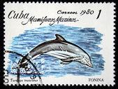 CUBA - CIRCA 1980: A stamp printed in Cuba shows Common Bottlenose Dolphin - Common Bottlenose Dolphin, circa 1980 — 图库照片