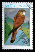 VIETNAM - CIRCA 1982: A stamp printed in Vietnam shows Common Kestrel - Falco tinnunculus, series, circa 1982 — Stock Photo