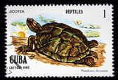 "CUBA - CIRCA 1982: A stamp printed in Cuba shows Cooter Turtles - Pseudemys decussala, series ""Reptiles"", circa 1982 — Stock Photo"