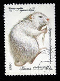 USSR - CIRCA 1980: A stamp printed in the USSR shows Coypu or nutria - Myocastor coypus, circa 1980 — Foto Stock