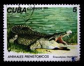 CUBA - CIRCA 1982: A stamp printed in Cuba shows Crocodylus rhombifer, circa 1982 — Stock Photo