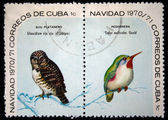 CUBA - CIRCA 1970: A stamp printed in Cuba shows the Bird Cuban Pygmy-owl - Glaucidium siju and Cuban Tody - Todus multicolor, stamp is from the series, circa 1970 — 图库照片