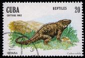 "CUBA - CIRCA 1982: A stamp printed in Cuba shows Cuban Rock Iguana - Cyclura nubila, series ""Reptiles"", circa 1982 — Stock Photo"