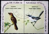 CUBA - CIRCA 1970: A stamp printed in Cuba shows the Bird Cuban Solitaire - Myadestes elisabeth and Cuban Gnatcatcher - Polioptila lembeyei, stamp is from the series, circa 1970 — Stock Photo
