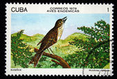 CUBA - CIRCA 1978: A stamp printed in Cuba shows the Bird Cuban Solitaire - Myadestes elisabeth, stamp is from the series, circa 1978 — Stock Photo