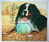 KAMPUCHEA - CIRCA 1990: A stamp printed in Kampuchea (Kingdom of Cambodia) shows Dog Bernese, circa 1990 — Stock Photo