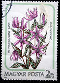 HUNGARY - CIRCA 1985: A stamp printed in Hungary shows flower Dogtooth violet - Erythronium dens-canis, circa 1985 — Stock Photo