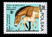 POLAND - CIRCA 1978: A stamp printed in Poland shows Przewalski Horse, circa 1978 — 图库照片