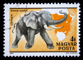 HUNGARY - CIRCA 1981: A stamp printed in Hungary shows African Bush Elephant - Loxodonta africana, circa 1981 — Stock Photo