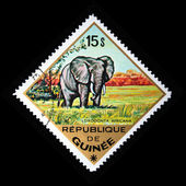 GUINEA - CIRCA 1975: A stamp printed in Guinea shows African Bush Elephant - Loxodonta africana, circa 1975 — Stock Photo