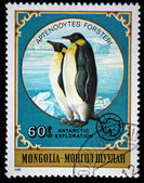 MONGOLIA - CIRCA 1980: A stamp printed in Mongolia shows Emperor Penguin - Aptenodytes forsteri, series Antarctic exploration, circa 1980 — Stock Photo