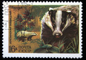 USSR - CIRCA 1975: A stamp printed in the USSR shows European Badger, one stamp from series, circa 1975 — Stock Photo