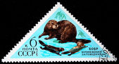 "USSR - CIRCA 1961: A stamp printed in USSR (Russia) shows Eurasian Beaver with the inscription ""Castor fiber"" from the series ""Animals"" , circa 1961 — Photo"