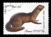 USSR - CIRCA 1980: A stamp printed in USSR shows mink dark brown (Putorius lutreola), series valuable species of fur-bearing animals, circa 1980 — Stock Photo