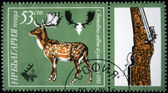 BULGARIA - CIRCA 1981: A stamp printed in Bulgaria shows Fallow Deer - Dama dama, circa 1981 — Stock Photo