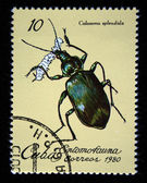 CUBA - CIRCA 1980: A stamp printed by Cuba shows the Bug Forest Caterpillar Hunter - Calosoma splendida, stamp is from the series, circa 1980 — Stock Photo