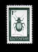 BULGARIA - CIRCA 1970s: A stamp printed in Bulgaria shows beatle Forest Caterpillar Hunter - Calosoma sycophanta, circa 1970s — ストック写真