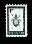 BULGARIA - CIRCA 1970s: A stamp printed in Bulgaria shows beatle Forest Caterpillar Hunter - Calosoma sycophanta, circa 1970s — 图库照片