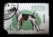 """USSR - CIRCA 1965: A stamp printed in USSR shows dogs with the inscription """"Pointer"""" from the series """"Service and hunting dogs"""", circa 1965 — Stock Photo"""