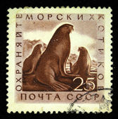 USSR - CIRCA 1960s: A stamp printed in the USSR shows a Northern Fur Seal, circa 1960s — Stock Photo