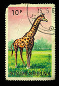 Kingdom of Burundi - CIRCA 1960s: A stamp printed in Burundi shows a giraffe, circa 1960s — Stock Photo