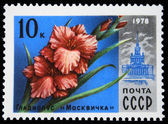 USSR - CIRCA 1978: A stamp printed in USSR shows a Gladiolus — Stock fotografie