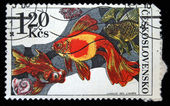 CZECHOSLOVAKIA - CIRCA 1975: A stamp printed in Czechoslovakia shows gold fishes, circa 1975 — Foto Stock