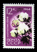 "USSR - CIRCA 1964: A stamp printed in USSR (Russia) shows a agricultural crop with the inscription ""Cotton (Gossypium)"" from the series ""Agricultural crops bred by Soviet scientists&quo — Stok fotoğraf"