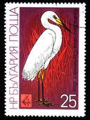 BULGARIA - CIRCA 1981: A stamp printed in Bulgaria shows bird Great Egret - Ardea alba, circa 1981 — Stock Photo