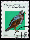 CUBA - CIRCA 1979: A stamp printed by Cuba, shows bird Geotrygon caniseps, circa 1979 — Stockfoto