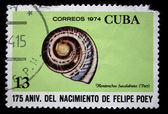 CUBA - CIRCA 1974: A stamp printed in Cuba shows mollusk Hemitrochus fuscolabiata (Poey), circa 1974 — Stock Photo