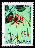 VIETNAM - CIRCA 1978: A stamp printed in Vietnam shows rosemallow - Hibiscus Schizopetalus, series, circa 1978 — Stockfoto