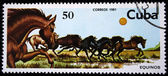 CUBA - CIRCA 1981: A stamp printed by Cuba shows the horses, stamp is from the series , circa 1981 — Stock Photo