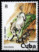 CUBA - CIRCA 1981: A Stamp printed in CUBA shows the image of the Horse, value 8c, series, circa 1981 — Foto Stock