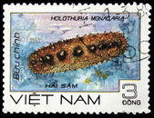 VIETNAM - CIRCA 1989: A stamp printed in Vietnam shows invertebrate Holothuria monocaria, circa 1989 — Stock Photo