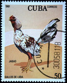 CUBA - CIRCA 1981: A stamp printed in CUBA shows Game-cock Jabao, from series Fighting cocks, circa 1981 — Stockfoto