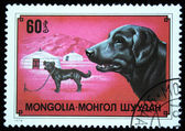 MONGOLIA - CIRCA 1978: A stamp printed in Mongolia shows dog Labrador Retriever, one stamp from series, circa 1978 — Stock Photo