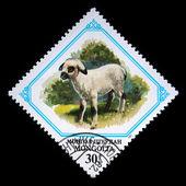 Mongolia - intorno al 1982: un timbro stampato in mongolia illustrato agnello, un francobollo da serie, intorno al 1982 — Foto Stock