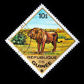 GUINEA - CIRCA 1975: A stamp printed in Guinea shows Leo - Panthera leo, circa 1975 — Foto Stock