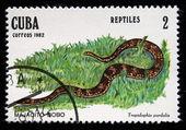 "CUBA - CIRCA 1982: A stamp printed in Cuba shows Leopard dwarf boa - Tropidiphis pardalis, series ""Reptiles"", circa 1982 — Stock Photo"