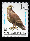 HUNGARY - CIRCA 1983: A Stamp printed in Hungary shows Lesser Spotted Eagle - Aquila pomarina, circa 1983 — Stock Photo