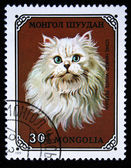 MONGOLIA - CIRCA 1979: A stamp printed in Mongolia shows Long Haired White Persian cat, series, circa 1979 — Stock Photo